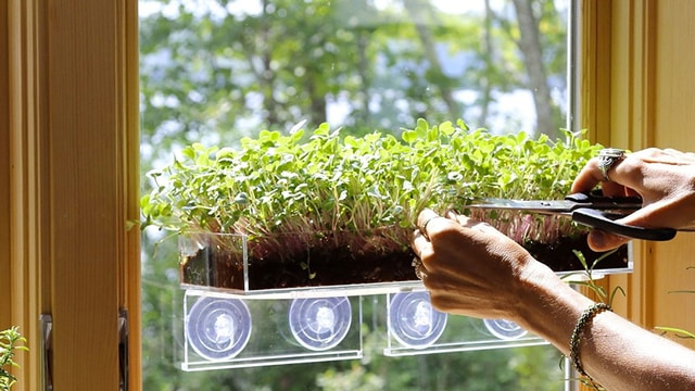 Atasi Rasa Stres Selama Karantina Mandiri dengan Berkebun di Lahan Sekitar Rumah
