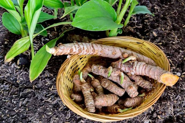 Berkebun Di Rumah Bareng Si Kecil, Coba Tanam 6 Sayuran Ini!